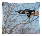 Immature Eagle Wheels Down Tapestry