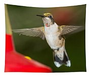 Immature Male Ruby-throated Hummer Tapestry