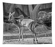 Impala    Black And White Tapestry