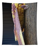 Imperial Moth Profile Tapestry