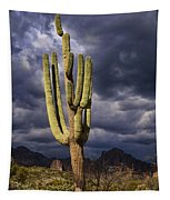 In Search Of That Perfect Saguaro  Tapestry