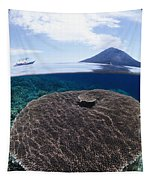 Indonesia, Coral Reef Tapestry
