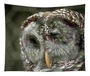 Injured Owl Tapestry