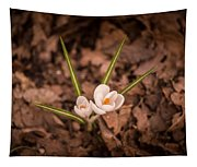 Isolated Crocus Tapestry