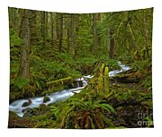 Lifeblood Of The Rainforest Tapestry