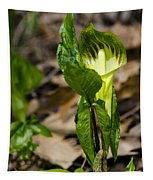 Jack In The Pulpit Tapestry