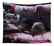 Johnny On The Montana Throw Tapestry