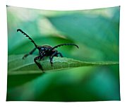 Just Looking For Another Beetle Tapestry