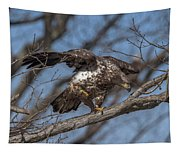 Juvenile Bald Eagle With A Fish Drb0218 Tapestry