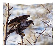 Juvenile Eagle Taking Off   Tapestry