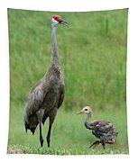 Juvenile Sandhill Crane With Protective Papa Tapestry