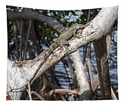 Key West Iguana In Mangrove 3 Tapestry