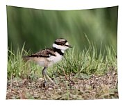 Killdeer - 24 Hours Old Tapestry
