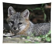 Kit Fox1 Tapestry