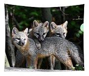 Kit Fox10 Tapestry