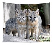 Kit Fox6 Tapestry