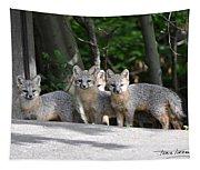 Kit Fox9 Tapestry