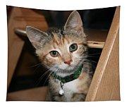 Kitten Tapestry