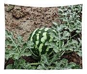 Ky Watermelon Tapestry