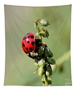 Lady Beetle Tapestry