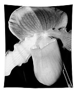 Lady Slipper Orchid Black And White Tapestry