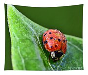 Ladybug With Dew Drops Tapestry