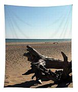 Lake Superior Driftwood Tapestry