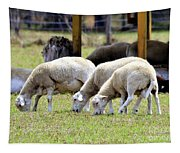 Lambswool Tapestry
