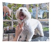 Laughing Adorable White Dog Is Groomed Tapestry