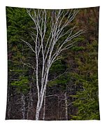 Life's A Birch No.1 Tapestry