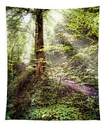 Light Along The Trail Tapestry