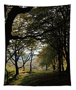 Light Through Woodland Darkness Tapestry