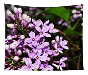 Lilac Bush In Spring Tapestry