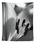 Lily - American Cheerleader 14 - Bw - Water Paper Tapestry