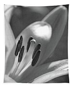 Lily - American Cheerleader 24 - Bw - Water Paper Tapestry
