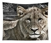 Lion Portrait Tapestry