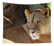 Lioness 3 Tapestry