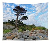 Long Beach Tree Gloucester Ma Tapestry