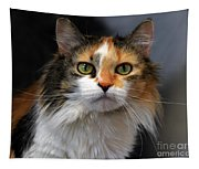 Long Haired Calico Cat Tapestry