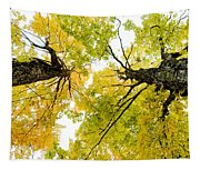 Looking Up At Fall Tapestry