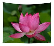 Lotus--shades Of Past And Future Dl029 Tapestry