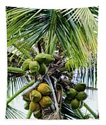 Lovely Bunch Of Coconuts Tapestry