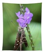 Lovely Moth On Dainty Flower Tapestry