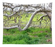 Low Branches On Sycamore Tree Tapestry