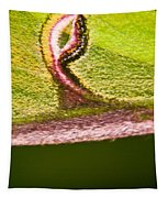 Luna Moth Eye Tapestry