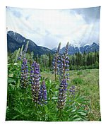 Lupine In The Alpine Tapestry
