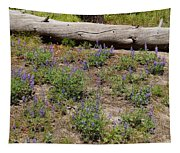 Lupines And A Log Tapestry