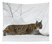 Lynx Hunting In The Snow Tapestry