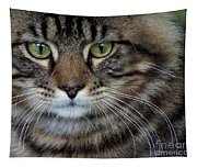 Maine Coon Cat Portrait Tapestry