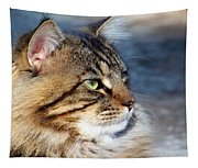 Maine Coon II Tapestry
